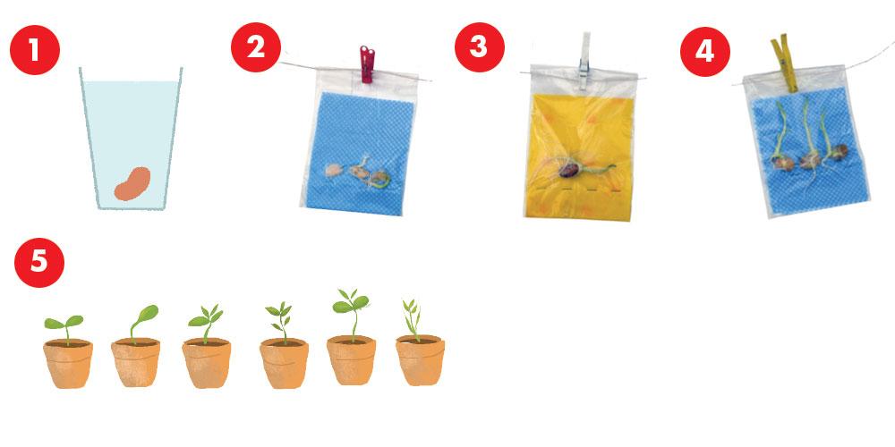 Spring Craft & Science Activities for Children